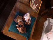 Tyra Misoux Special Edition 8: Die 8. Sünde